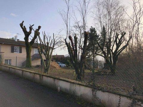 Pensez à la taille de vos arbres pour l'hiver - Paysagiste à Annecy