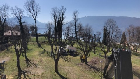 Elagage veyrier du lac ( camping)