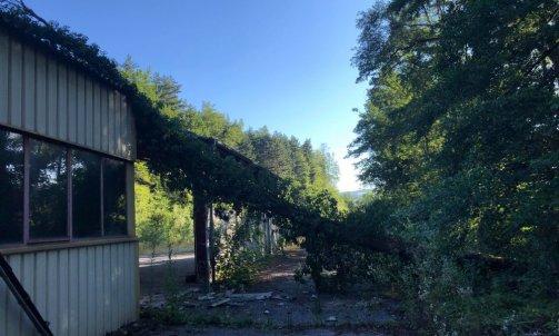 Evacuation d'un arbres tomber avec la tempête