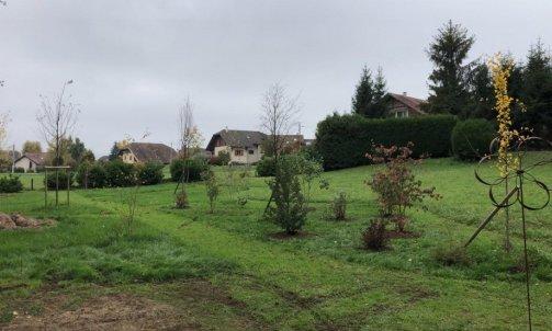 Création de parc , plantation d'arbres à Gruffy