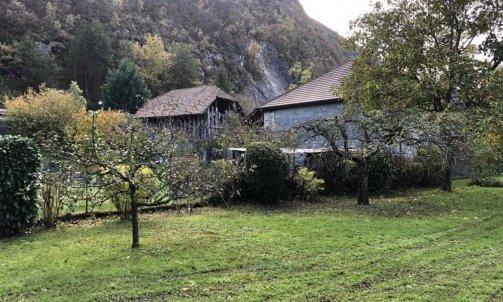 Taille d'arbre fruitiers à Duingt