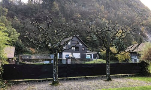 Taille d'arbre à Saint Jorioz