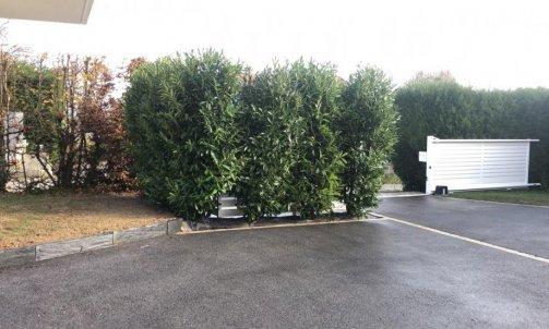 Transport d'arbre à Annecy