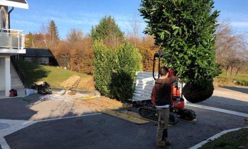 Manutention d'arbres à Annecy