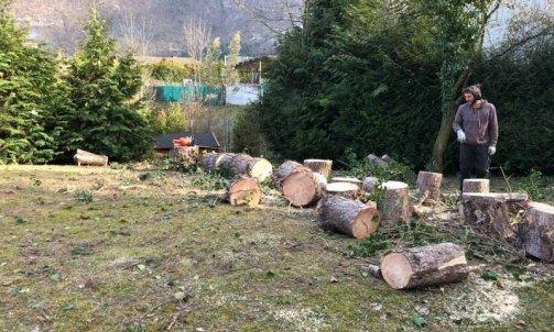 Abattage d'arbre à Seynod